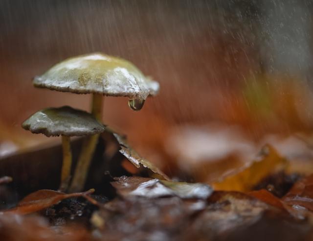 09. Regen